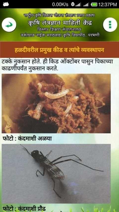 हळद लागवड VNMKV Parbhani screenshot 7