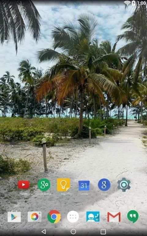 Panorama Wallpaper: Palms screenshot 6