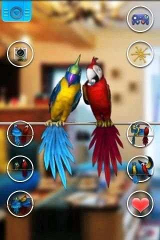 Talking Parrot Couple Free screenshot 2