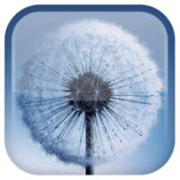 Dandelion Live Wallpaper أيقونة
