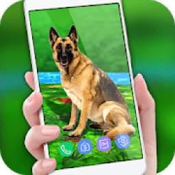 Pet Dog Live Wallpaper 2018: Colorful Background