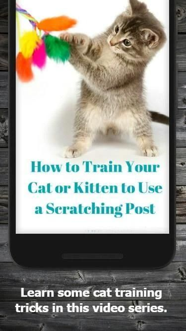 How to Train Your Cat screenshot 1